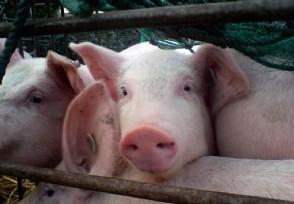 华为也要养猪了吗 生猪养殖业真香
