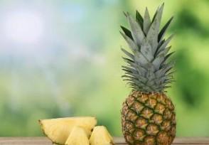 菠萝价涨近3倍创历史新高创30年来最高价格