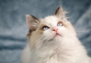 共享猫咪生意火爆不同种类押金也会不同