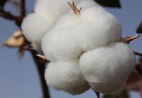 国家棉花产业联盟发布声明 都说了些什么内容?
