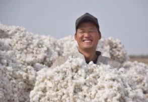 新疆棉花最新消息棉农年收入人均8万以上