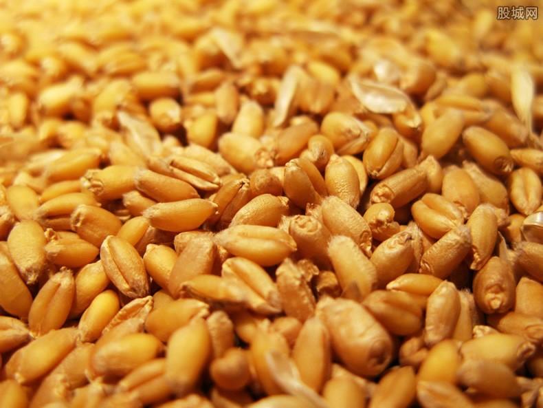2021年小麦最新价格行情