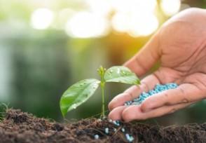 禁止种植的农作物有哪些