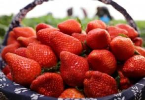 怎么种草莓