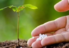 风险小投入低的种植业有哪些