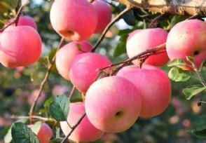 最好吃的苹果有哪些
