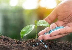 西洋南瓜栽培技术要点有哪些