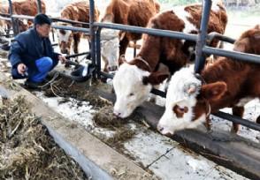 养牛的最基本条件有哪些
