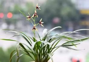 适合室内栽培的植物有哪些