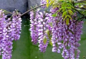 开花的藤本植物有哪些