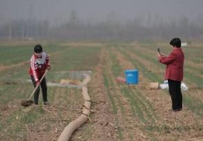农民在家干什么最挣钱